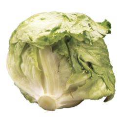 LETTUCE CELLO HEAD PREMIUM
